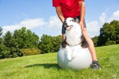 Swans Vets And Your Pet Queries
