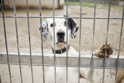 20,000 pets euthanased each year because of rental restrictions