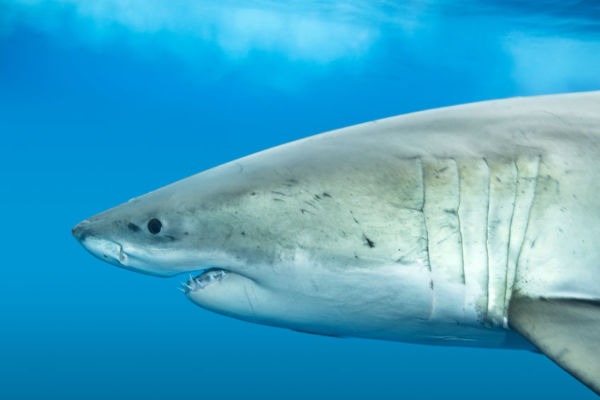 "Calls for Federal Government to ""scientific evidence"" to tackle sharks"
