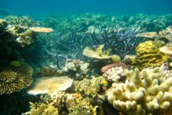 Marine scientist says Twiggy's $100 million ocean donation is misled