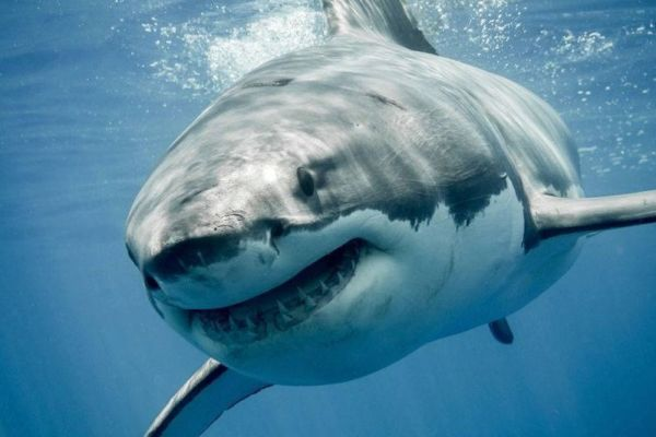 Article image for Esperance locals are calling for more to be done to stop sharks