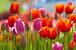 Spring has sprung at Araluen Botanic Park
