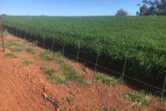 Barnaby Joyce to help Bolgart farmer donate $70,000 barely straw crop