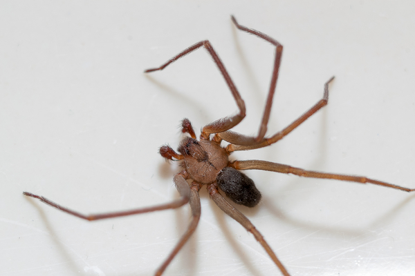 Friend or foe: how do you feel about the insects & spiders living in your home?