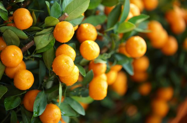 What should you be doing with your plants as we head into winter? 6PR's Sue McDougall on Arvos