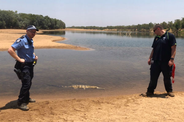 Croc rescue at Fitzroy Crossing