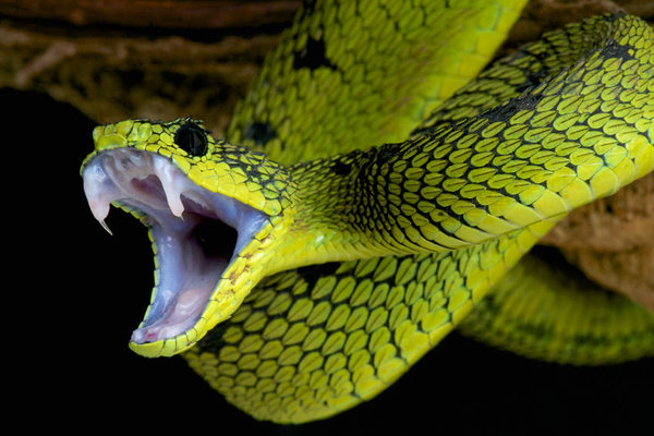 It's snake season, do you know what to do?