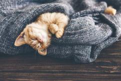 Love kittens?