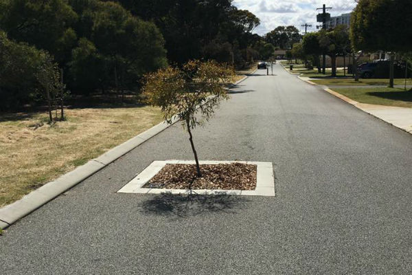 Fork in the road – but tree?
