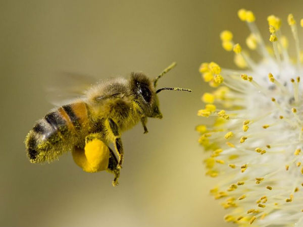 Article image for Bee sting causes crash