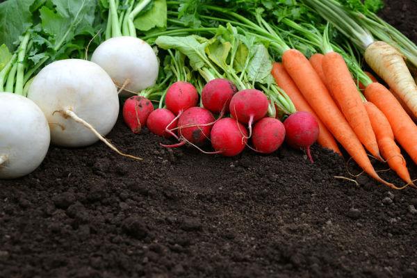 Sue McDougall on fertilisers, midgies and citrus