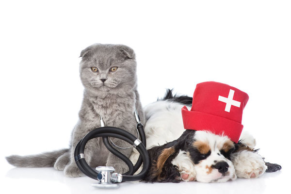 Has your pet ever had a blood transfusion?