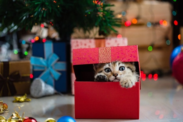 A very Cat Haven Christmas