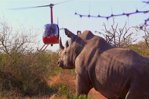 The secret life of South African wildlife – Steve 'Grumpy' Collins