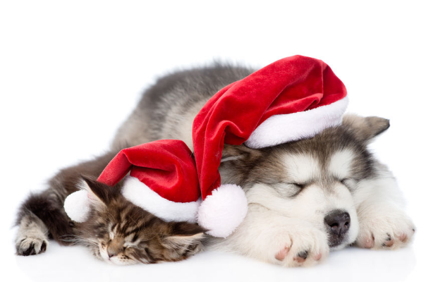 Keep Your Pets Happy This Christmas