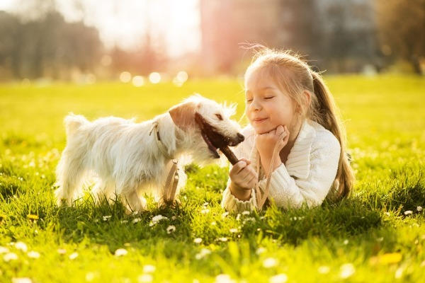 What should you teach your kids about dogs?