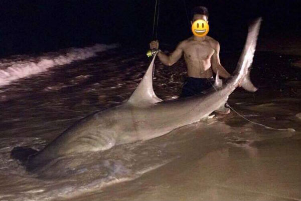 Teen lures sharks to popular shores