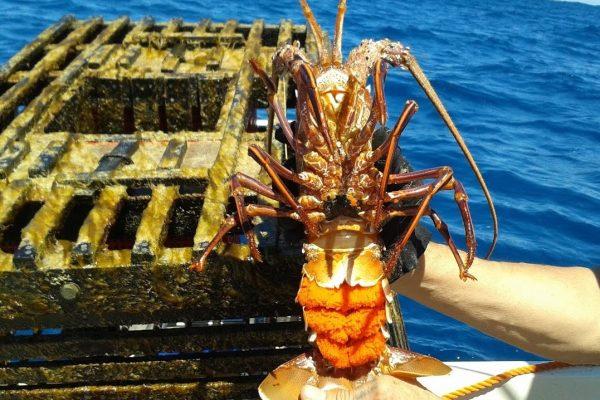 Major development for controversial crayfish plan
