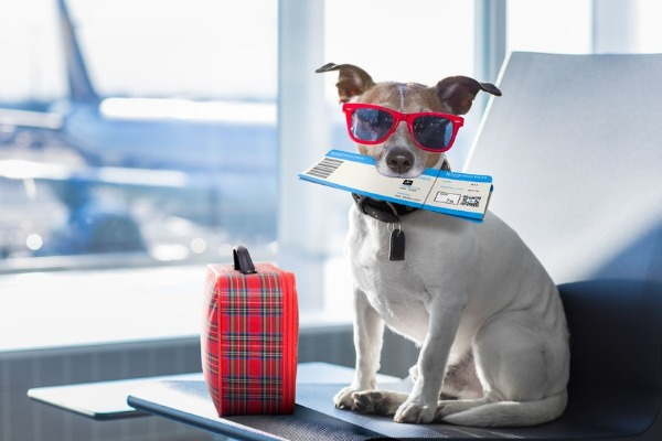 Grumpy's top tips for your pets while you travel
