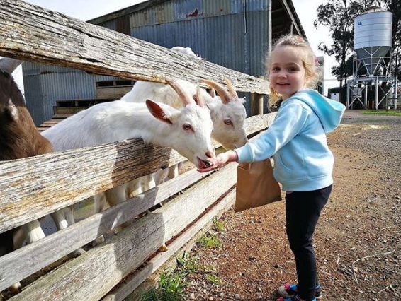 Goat being held as evidence in vegan theft case stolen from Gippy Goat Cafe