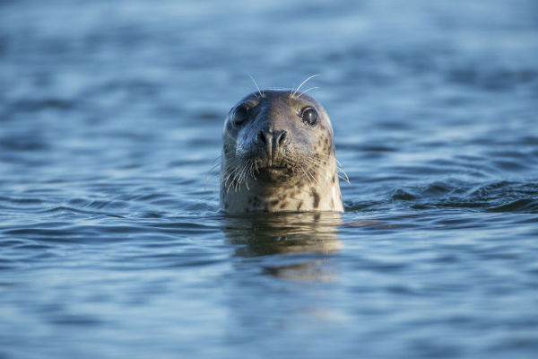 USB found in seal poop
