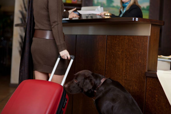 Article image for Mandurah hotel embraces dogs