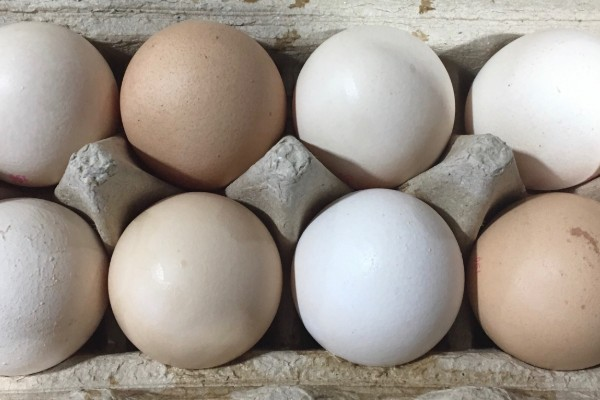 Are supermarket free range eggs all they're cracked up to be?