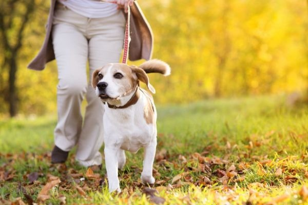 Are the state government's proposed dog training guidelines barking mad?