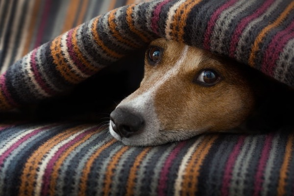 Can your dog help you beat the winter blues?