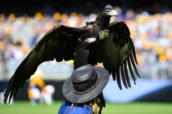 Push to bring Auzzie the West Coast Eagle home …. to Alice Springs