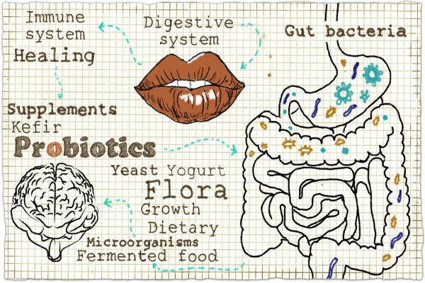 Probiotics and the Mediterranean diet