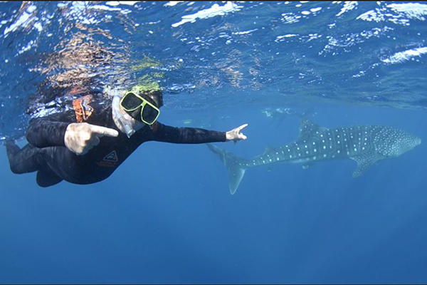 Steve Price swims with the world's largest fish
