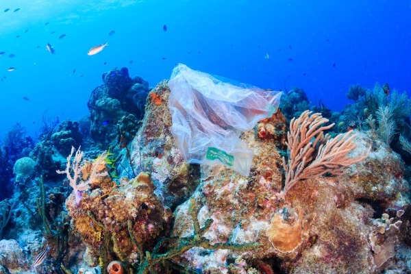 How do we tackle ocean plastic pollution?