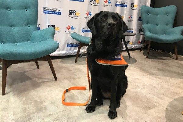 The history of Guide Dogs
