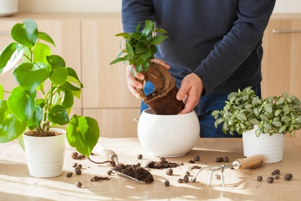 Could taking care of your plants help your mental health?