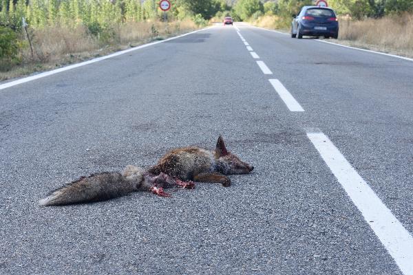 Road Kill Research