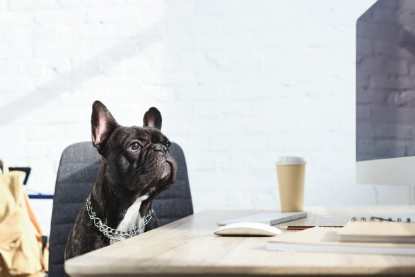 What's the downside to designer dogs?