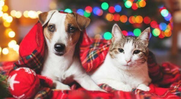 Article image for What Is The Ideal Dog To Foster? Smelly Dogs and Irritable Cats With Dr. Mel Criddle!