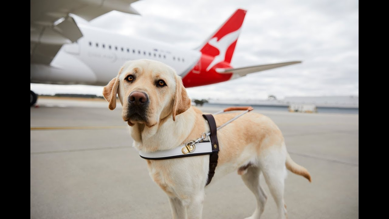 Article image for Rescue Dogs and Dogs on Planes – Dr. Tony Vigano From Swans Vets