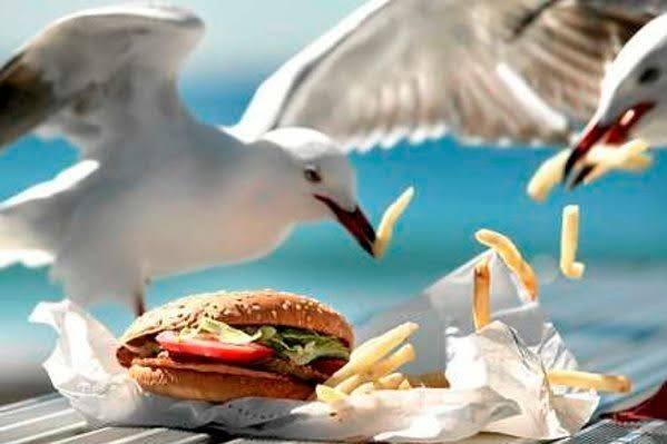 How to keep pesky seagulls away from your food