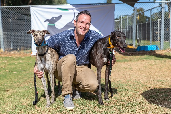 Gentle giant dogs make perfect pets