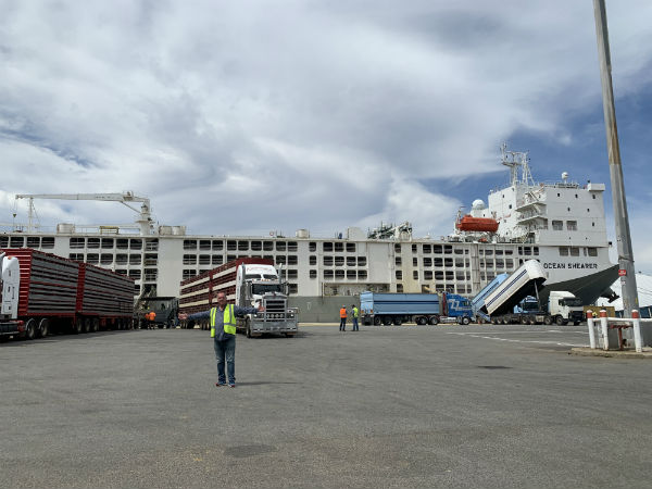 Millsy's tour of a live export vessel