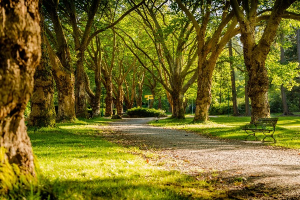 How important are trees to our suburbs?