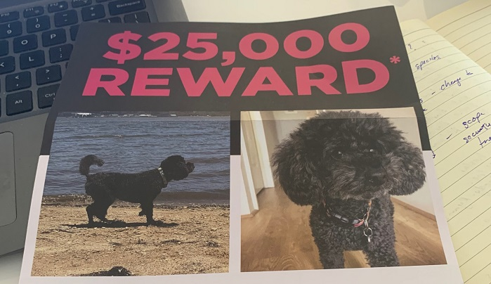 $25,000 REWARD To Find A Toy Poodle!
