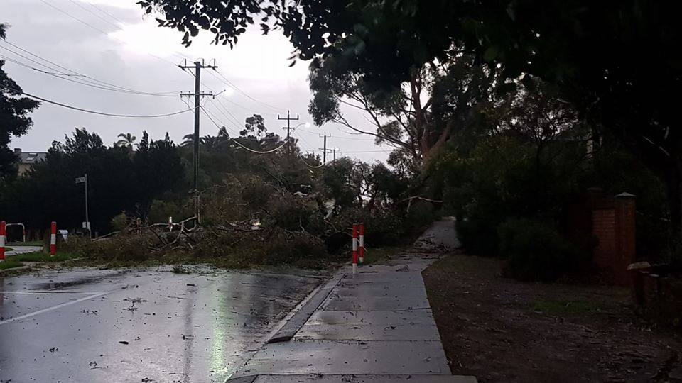 Fallen trees and leaking roofs cause issues for DFES