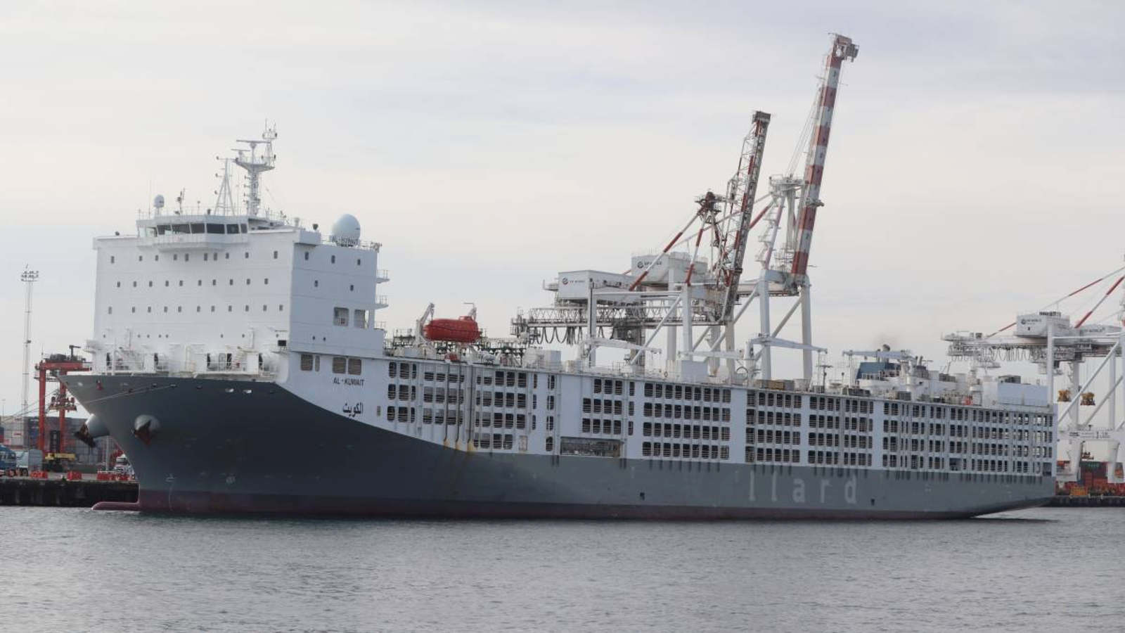 Article image for Latest COVID-19 figures: Live export ship crew sick