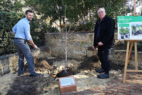 The Ginkgo Biloba planted in South Perth descended from a tree that survived the Hiroshima bomb