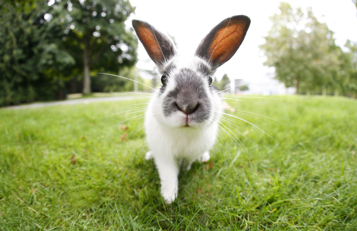 100 rabbits have had to be removed from a Perth home