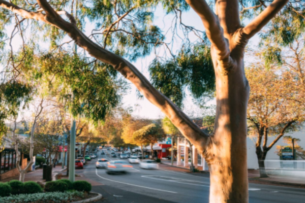 After almost a years' hiatus, Margaret River's Main Street is open for buisness