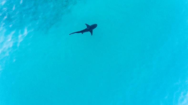 Article image for Esperance locals demand action over problem sharks
